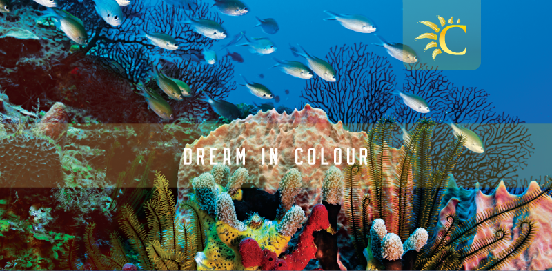 Dream in Colour-01